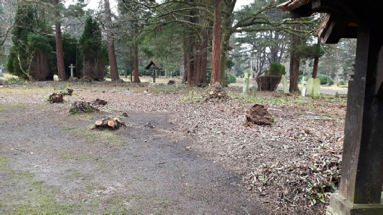 The St Alban's burial ground at Brookwood after the removal of all the rhododendrons